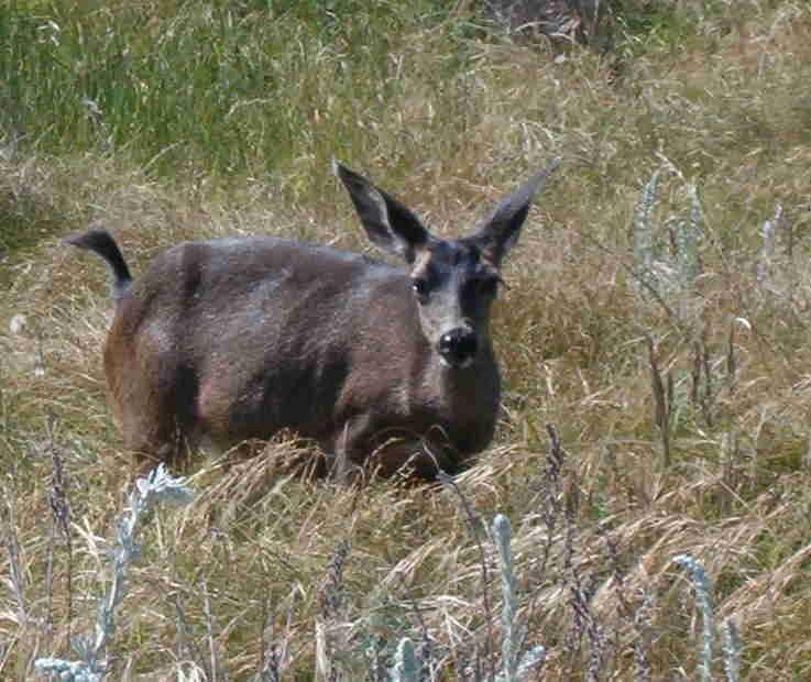 More deer at the 2005 SAA Leadership Retreat