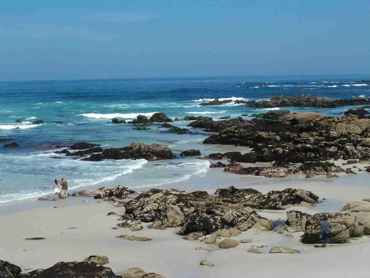 Tide pools at the 2005 SAA Leadership Retreat, Asilomar.