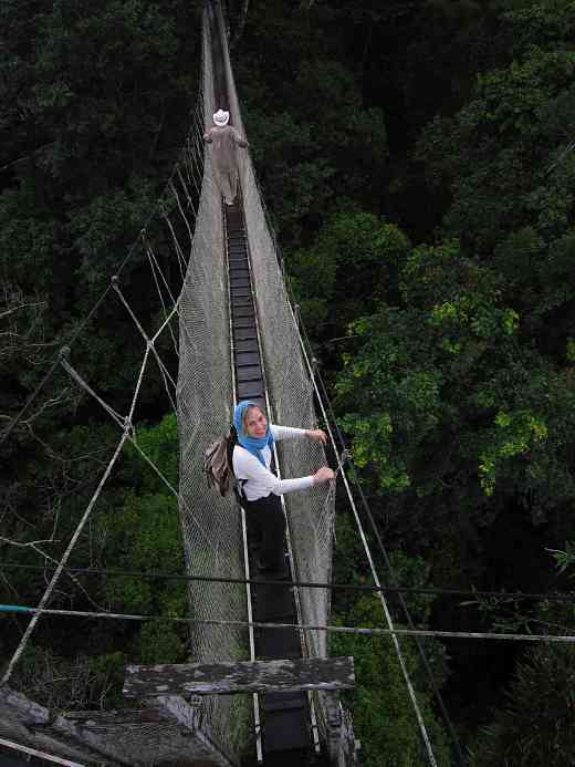 Mary and the Amazon canopy