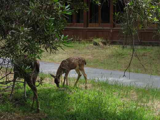 Deer spotted at the 2005 SAA Leadership Retreat