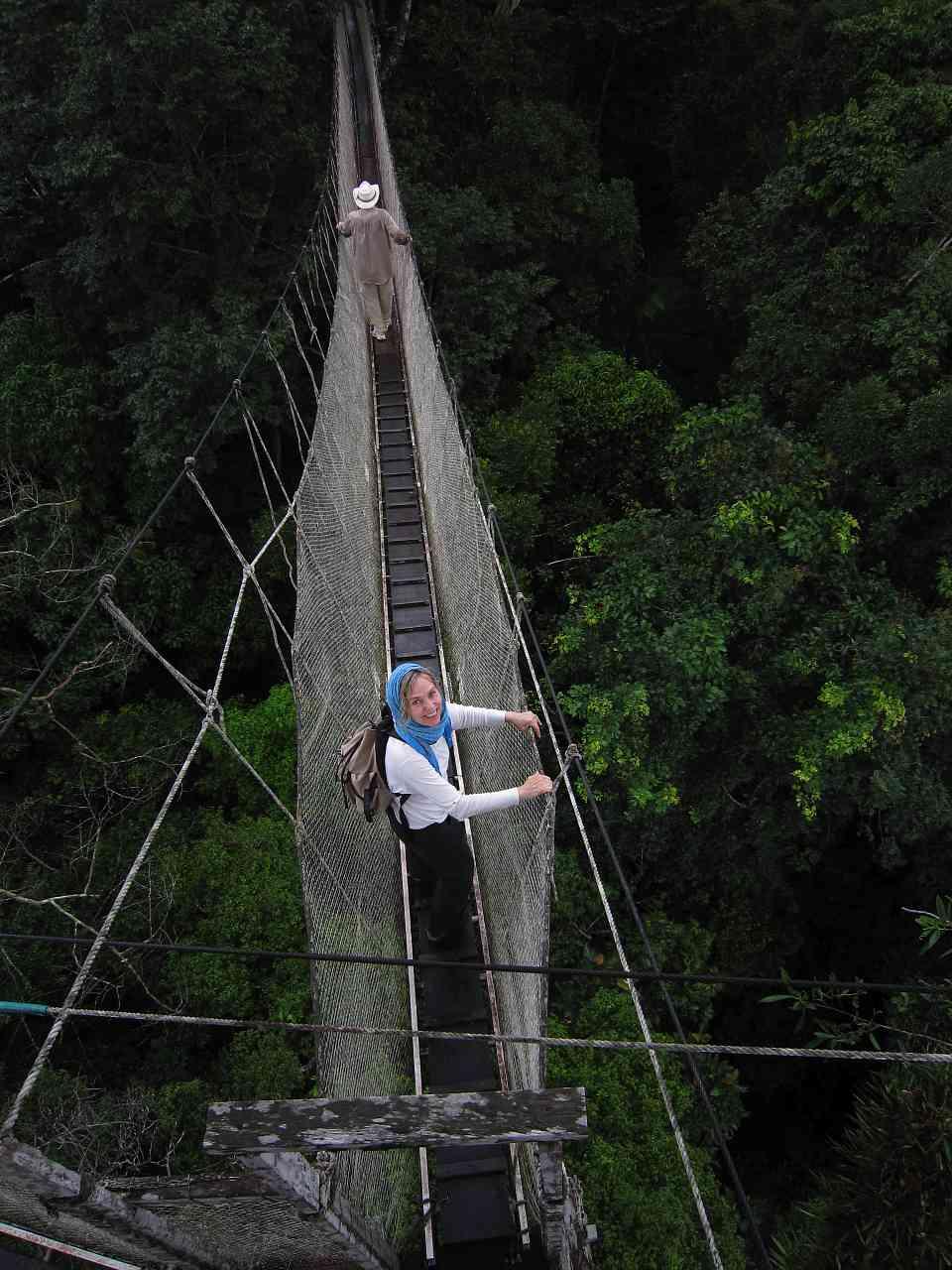 Mary and the Amazon canopy